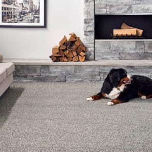Dog on Carpet floor | West River Carpets