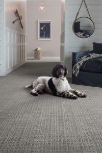 Dog sitting on Carpet | West River Carpets