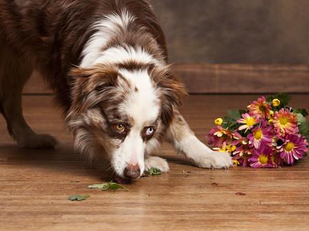 Dog on floor | West River Carpets